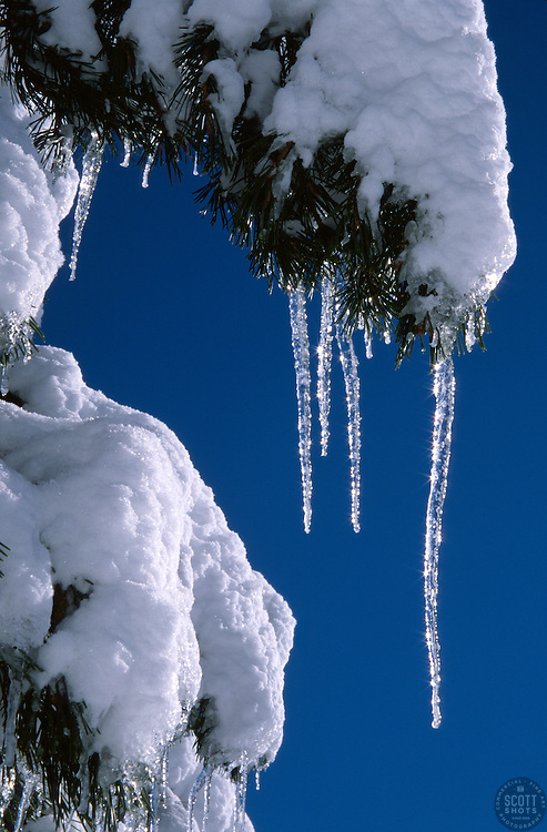 &quot;Icicles 3&quot;- Photographed near Alder Creek in the Tahoe Donner area of Truckee, CA.<br />