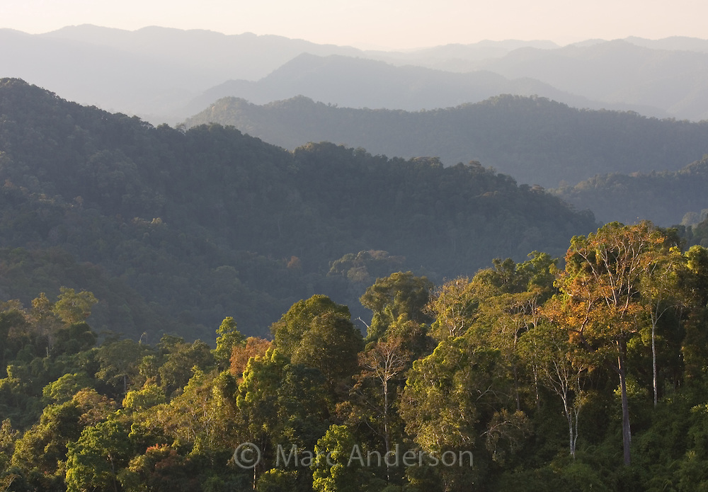 Rainforest covered hills, Kaeng Krachan National Park, Thailand
