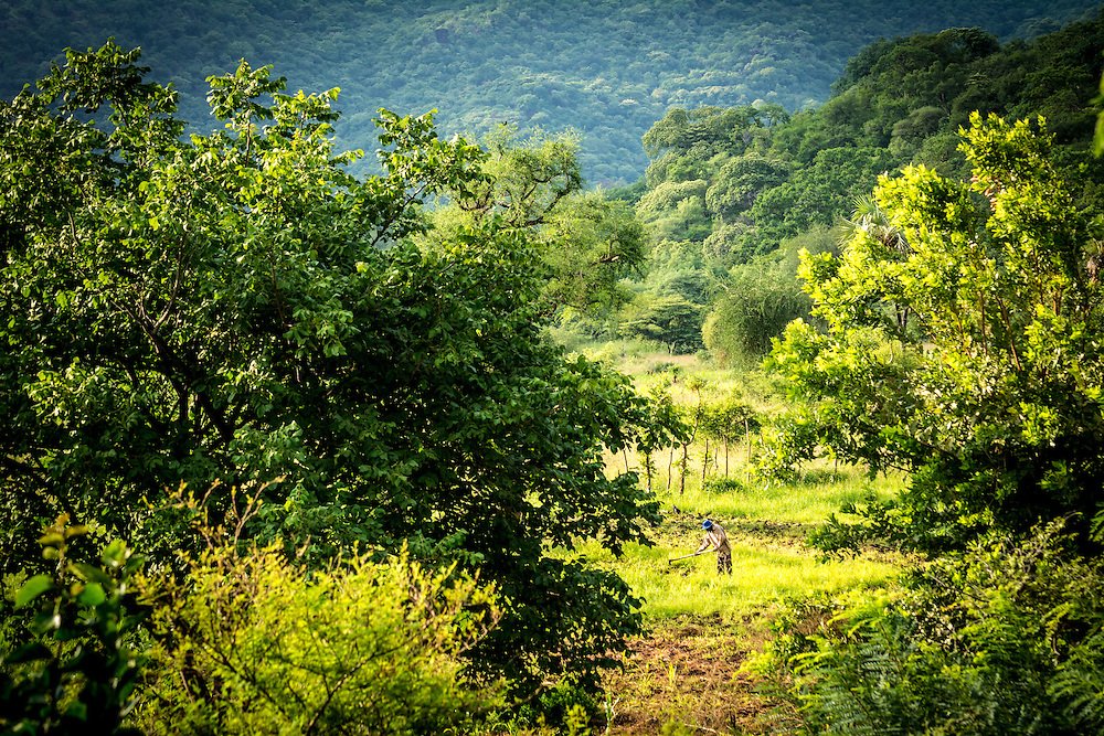 A man tends his peanut field near Ohilang. Most villagers head to the fields every day from sunrise to sunset.