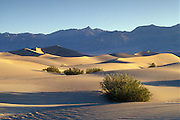 Mesquite Flat Sand Dunes, Creosote Bushes and Grapevine Mountains; Death Valley National Park, California.