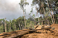 Turama Forest Industries loggers bulldozing through the forest near Morere to extract trees which had been felled, in the 'Turama extension' logging concession, Gulf Province, Papua New Guinea, Saturday 6th September 2008.These forests are being felled by Turama Forest Industries - a group company of Malayasian logging giant Rimbunan Hijau. Twenty percent of global greenhouse emissions annually are caused by the deforestation of natural forests worldwide.