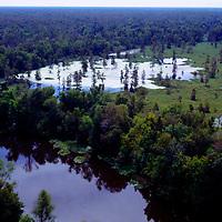 Louisana Swamp Lands& Cypress Trees