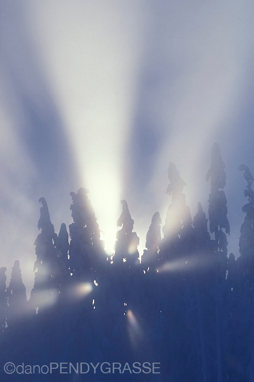 Rays of sunlight pierce the snowy forest and illuminate the fog.