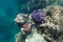 Corals in The Aquarium, Clerke Lagoon at the Rowley Shoals.