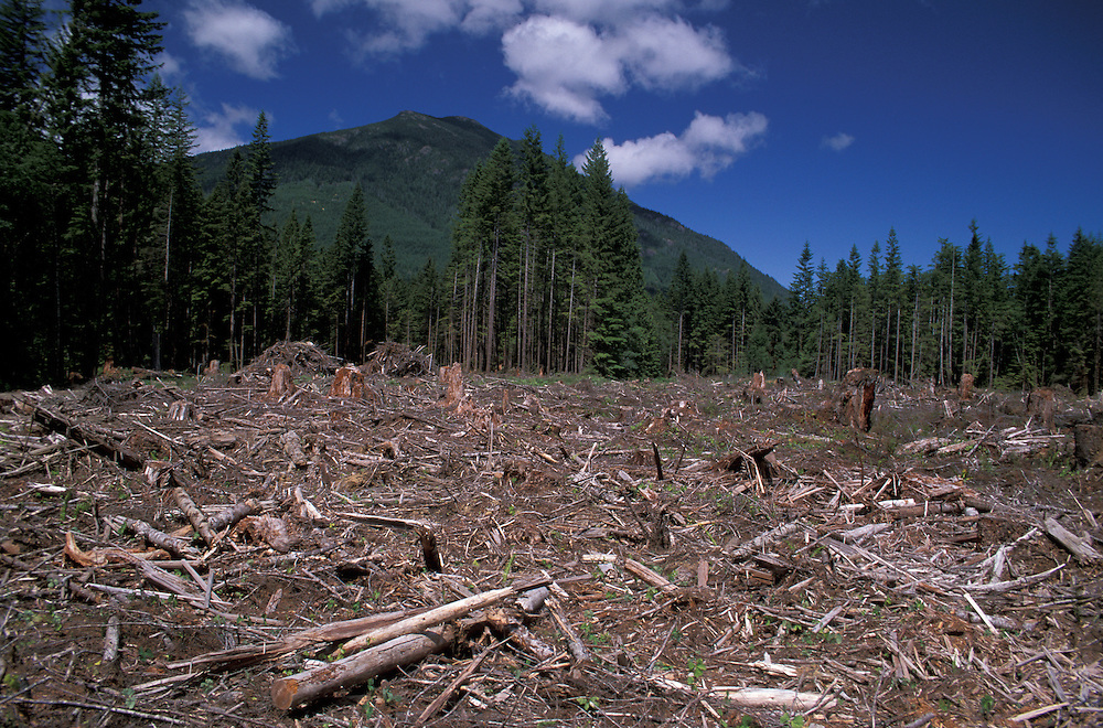 Clearcut Forest near Rock Bay, Vancouver Island, British Columbia, Canada