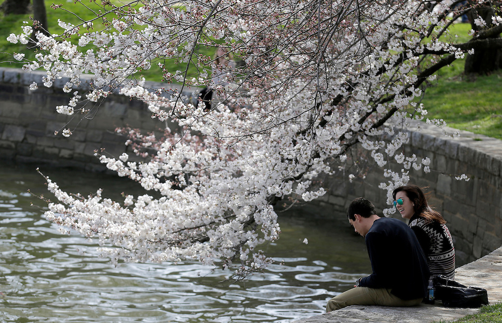 A couple sits under blooming cherry trees along the tidal bason in Washington March 23, 2016.      REUTERS/Joshua Roberts