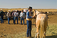 Montana cowboy and horse trainer Doyle Parker shows palomino gelding Quarter Horse to buyers at Leachman Hairpin Cavvy horse sale southeast of Billings Montana