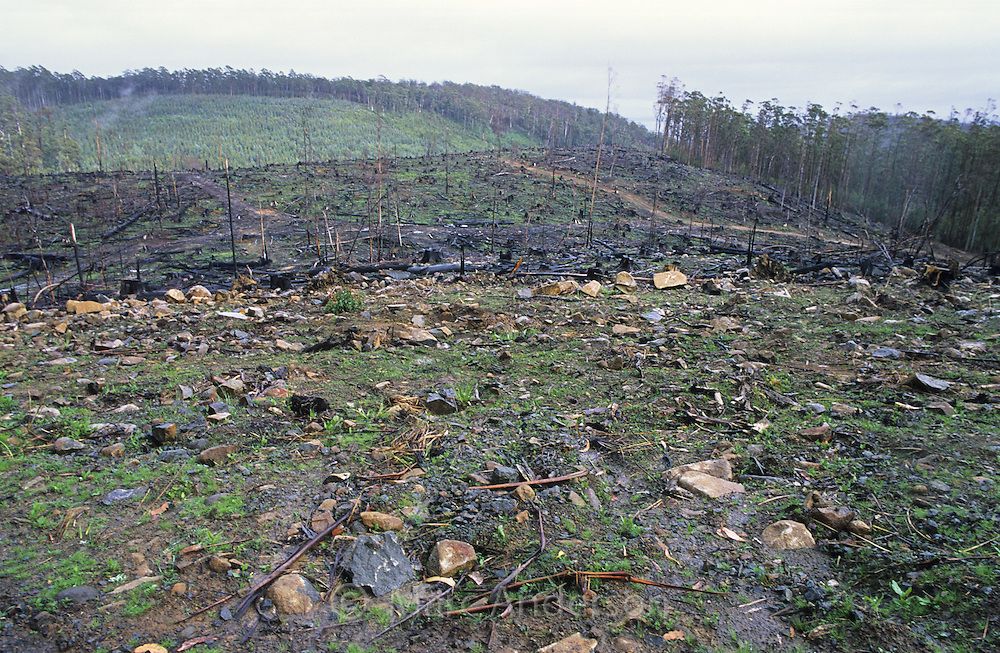 Area that has been heavily logged, Tasman Peninsula, Tasmania