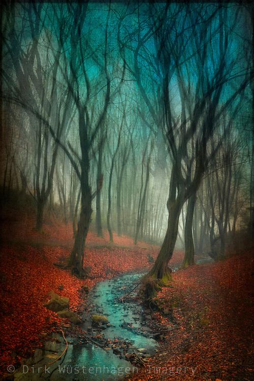 Creek running through surreal forest