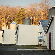 Chicken sheds in Delware, United States on March 1, 2013.
