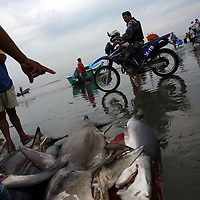 A policeman rides by on a motorbike as fishermen bring in their catch of shark in Manta, Ecuador on April 15, 2008. (Photo/Scott Dalton).