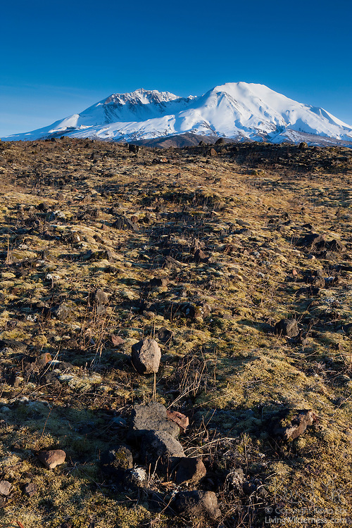 Lichen begins to overtake the rocky landscape within the blast zone at Mount St. Helens National Monument, Washington. This image was captured nearly 30 years after the violent May 18, 1980 eruption. The first wildflowers began to appear in this spot about 20 years after the eruption.