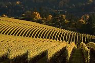 Oregon - Bella Vida vineyards