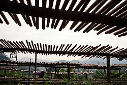 Silhouette of a Vietnamese woman working alongside drying racks, Yen Bai Province, Vietnam, Southeast Asia