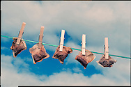 Teabags hanging out to dry, Scotland