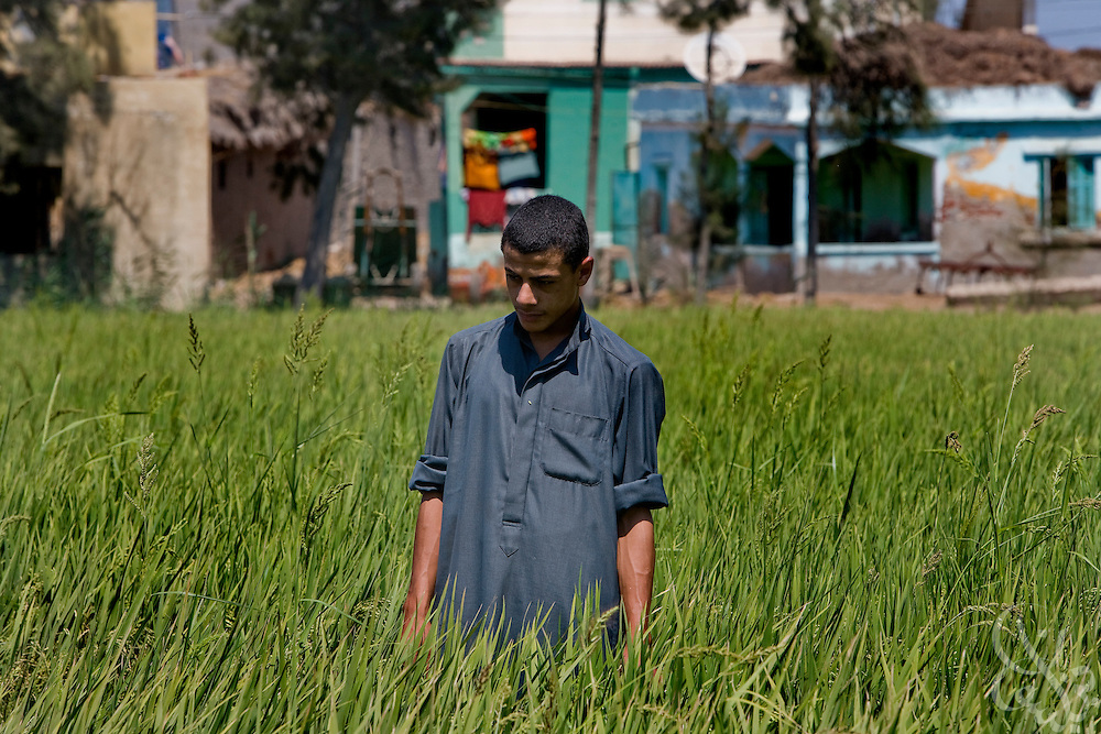 An Egyptian rice farmer tends to his field August 5, 2008 in the delta town of Bahr el-Sheik Ibrahim 130 kilometers NW of Cairo. Because an estimated 80% of Egypt's total available fresh water is used for irrigation of agricultural land, efforts are under way to teach farmers ways to improve their water conservation and irrigation efficiency. .
