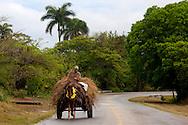 Horse and cart near Floro Perez,  Holguin, Cuba.