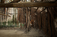 Hanging vines and roots decorate the Anping Tree House in Tainan, Taiwan.