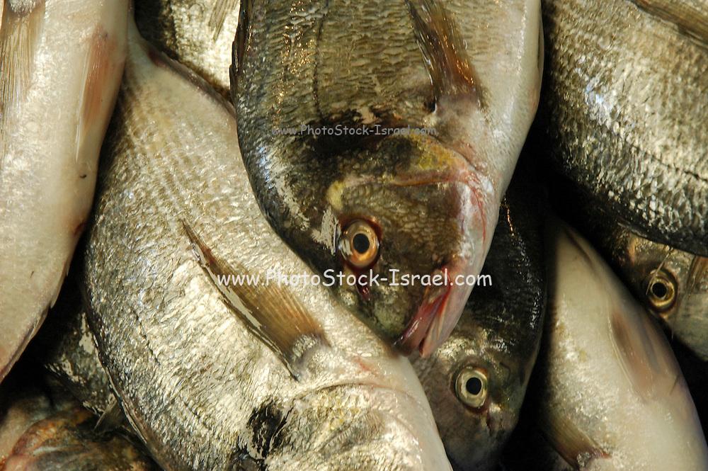 A heap of fresh fish at a market stall