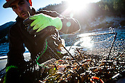 Justin Pulliam empties a trap of commercially harvested crayfish from Lake Tahoe near Incline Village, Nevada, July 8, 2012.