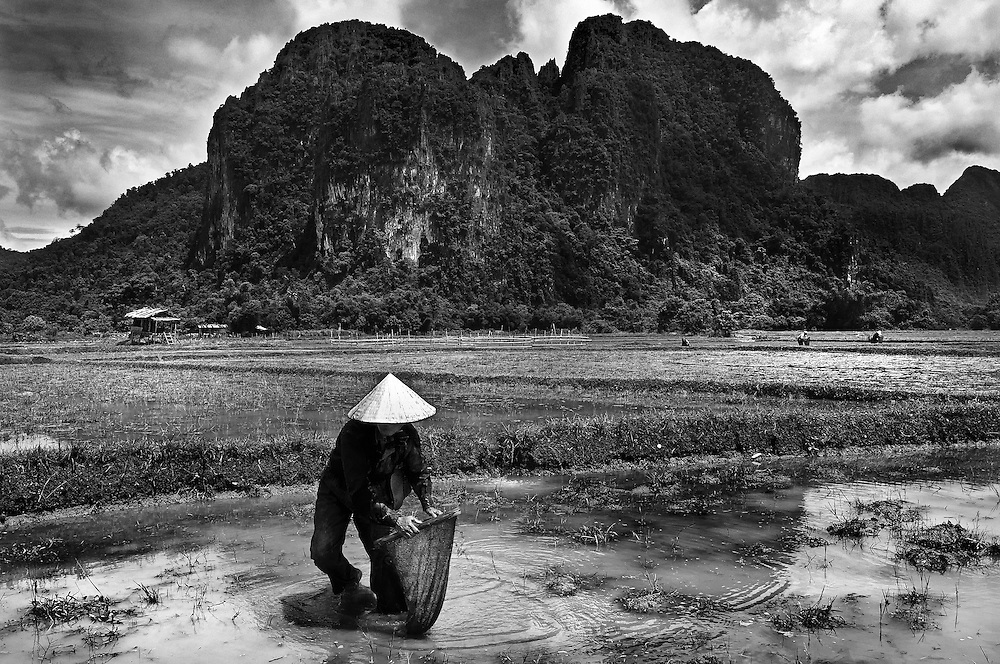 A farmer fishing for tadpoles and small fish in the flooded ricefield in Vang Vieng, Laos.