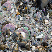 Shiny iridescent sea foam bubbles, Oceanside beach, Oregon, USA