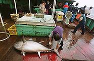 2000 South Atlantic, Illegal tuna fishing