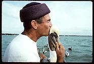 04: SEABIRD RESCUE DEAD PELICANS