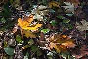 Forest floor in fall.