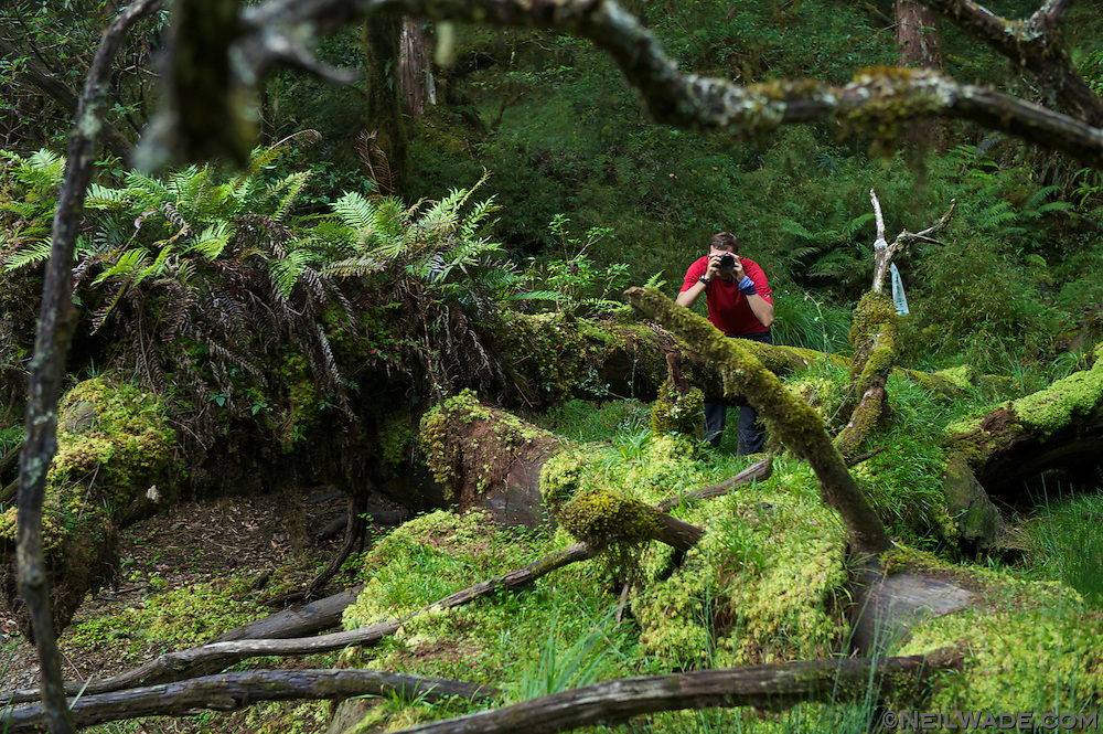 Stu points his camera through the lush greeness of the ferns, moss, and debris at The Secret Lake near Jialuo Hu, Taiwan.