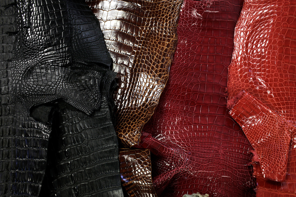 Alligator hides, tanned and dyed, lie out at Sebring Tannery in Sebring, Fla. The hides, used to make items from $600 belts to $30,000 handbags have dipped in demand recently because of a bad economy. Still the alligator retail industry generates more than $1 billion annually.