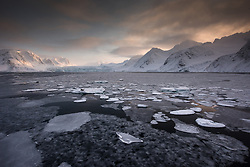 Harbor Seal (Phoca vitulina) on ice floe in Fuglefjorden in March at the northern tip of Spitsbergen, Svalbard, Norway