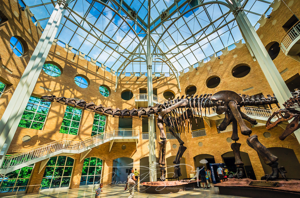 """Visitors walk through the Great Hall at Fernbank Museum of Natural History, May 23, 2014, in Atlanta, Georgia. The large dinosaur pictured is Argentinosaurus, a plant-eating dinosaur that weighed more than 100 tons and was 123 feet long. The museum opened in 1992 and is known for its massive dinosaur exhibitions. The museum also has an IMAX theater and holds popular public events like monthly salsa dance nights and the weekly """"Martinis & IMAX"""" program. (Photo by Carmen K. Sisson/Cloudybright)"""