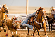 Rocky Boy Rodeo, Bulldogging, Steer Wrestling, Rocky Boy Indian Reservation, Montana, Tracy Robinson, Northern Cheyenne, INFR Qualifier