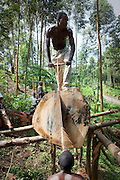 Democratic Republic of Congo, 'Survival in displaced people camps'.<br /> In Nyanzale displaced people camp, men found a way to provide for their needs. By uniting and buying a saw, they get a few money from woodcuts.