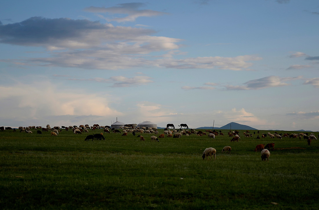 A flock of sheep graze in central Mongolia. Mongolia is the land of livestock with more than 30 million livestock, including 13.8 million sheep, 10.2 million goats, 3.1 million cattle, 2.6 million horses and 322,300 Bactrian camels. The livestock is permanently threatened by the fragile condition of pastureland, severe winters and endemic animal diseases. To cope in the short term, herders at the subsistence level may have to sell animals. With fewer animals they find it even harder to survive. Herders are among the poorest of the poor in Mongolia. — © Jeremy Lock/USAF