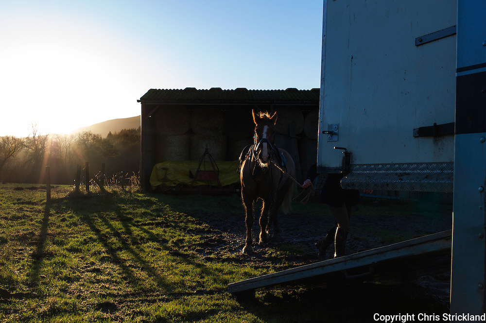 Bonchester Bridge, Hawick, Scottish Borders, UK, 3rd January 2015 - A pony is lead up the ramp of a horse box as the sun sets behind the village of Bonchester Bridge.