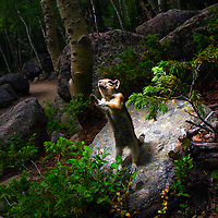 Animals like this chipmunk begging for food in Rocky Mountain National Park can become dependent on humans if fed and even become a nuisance and possible health concern.