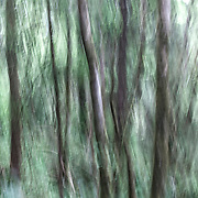 OR02333-00...OREGON - Abstract view of a forest in Ecola State Park.