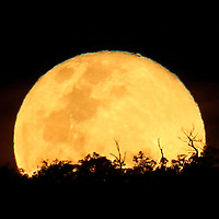 "The ""Super Moon"" rises over the Darling Range in Perth, Western Australia"