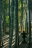 "Hokokuji Bamboo Garden; sometimes called ""The Bamboo Temple"" because of this grove; elsewhere at Hokokuji the zen garden, trees and plants are blended with the hills and natural background of the landscape."