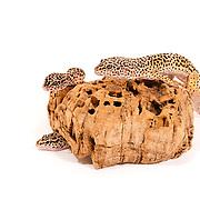 A group of leopard geckos, modelling on a bit of bark, taken in the studio.