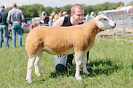 The Angus Show, Brechin, Saturday 8th June, 2013. Texel champ from R & M Stewart