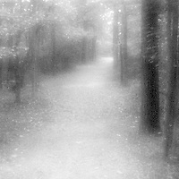 PL12013-00...NORTH CAROLINA - Pinhole image of a forest path in Dupont State Forest.