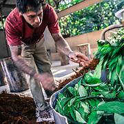 Circa due o tre volte l'anno viene preparato il té, il Daime, una fase chiamata feitio. Durante circa una settimana vengono raccolte e cucinate insieme ad acqua le foglie dell'arbusto Psychotria viridis e la liana Jagube che compongono le sostanze del Daime. Durante il giorno le donne raccoltono le foglie, e durante la notte gli uomini cantano gl iinni bevno il Daime mentre battono la liana riducendola in pezzettini molto sottili che poi saranno cucinati insieme alle foglie il giorno seguente / The holy preparation of Santo Daime's tea lasts for a whole intense week of work, night and day