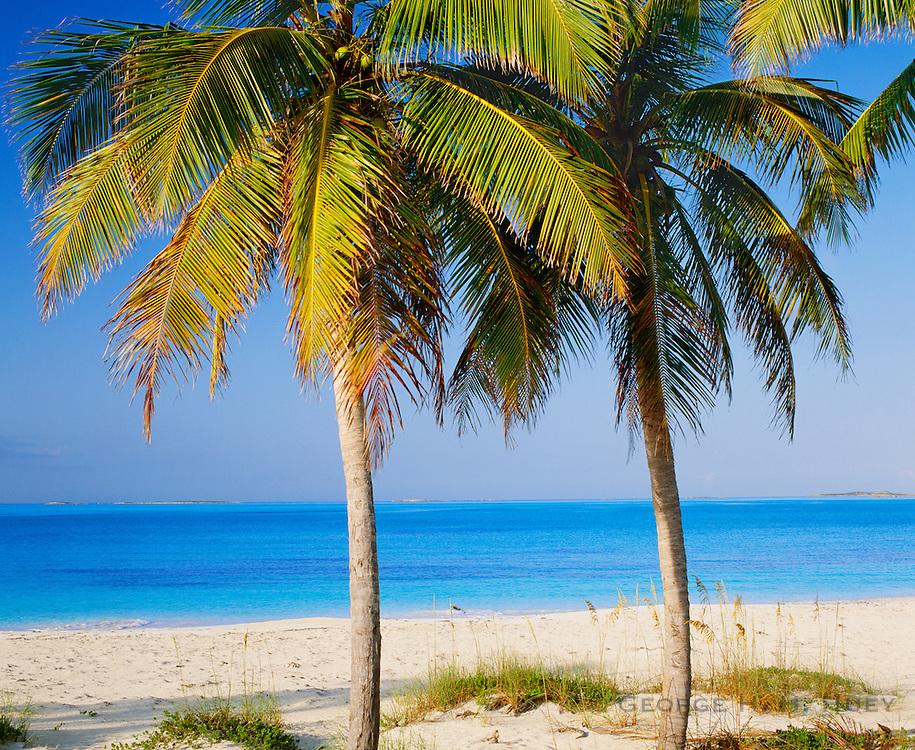 6204-1014 ~ Copyright: George H. H. Huey ~ Palms and beach at Tar Bay, Exuma Sound. Great Exuma Island, Exuma Cays, Bahamas.