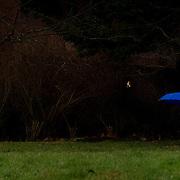 University of Victoria Rain January 23, 2015
