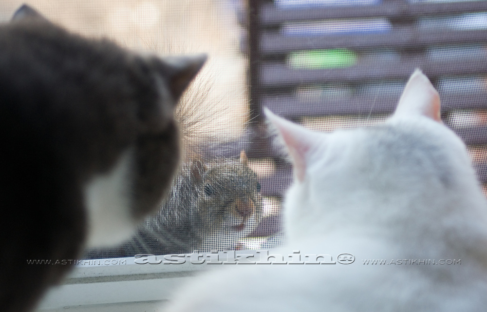 Cats and Squirrel