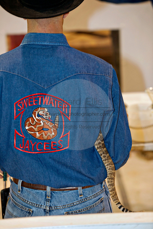 The tail of a western diamondback rattlesnake sticks out from behind a Jaycee volunteer snake handler during the 51st Annual Sweetwater Texas Rattlesnake Round-Up March 13, 2009 in Sweetwater, Texas. During the three-day event approximately 240,000 pounds of rattlesnake will be collected, milked and served to support charity.