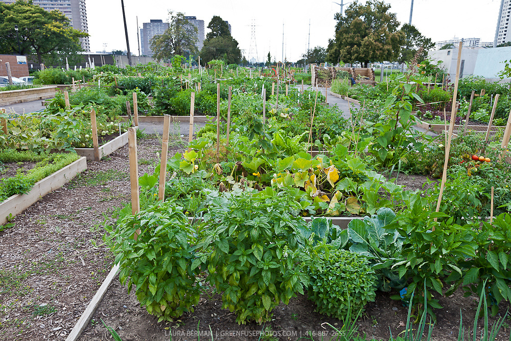 Community Garden GreenFuse Photos Garden farm food